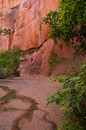 Buckskin Gulch, Arizona, Colorado River, hiking