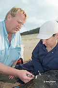 NOAA veterinarian Dr. Bob Braun takes a blood sample from a captured Hawaiian monk seal, Monachus schauinslandi, Critically Endangered endemic species, west end of Molokai, Hawaii, photo taken under NOAA permit 10137-6, Ho ike a Maka Project