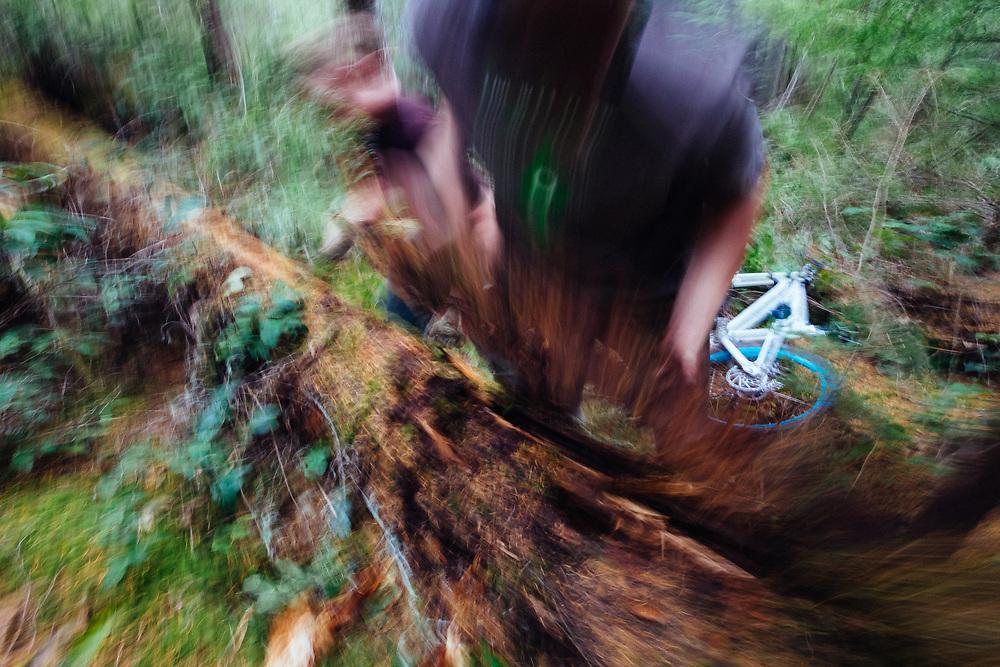 Owen Dudley works on the future line of a new mountain bike trail near Bellingham, Washington.