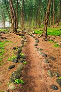 Forest trail at Pololu Beach, North Kohala,The Big Island, Hawaii USA
