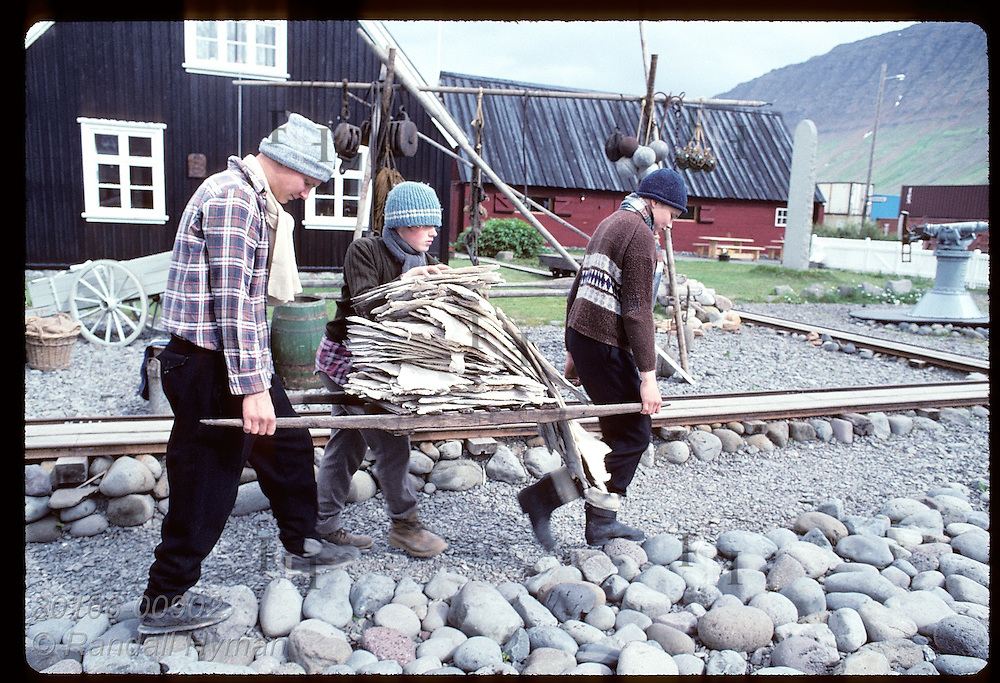 Teenage boys carry pallet of saltfish to maritime folk museum to be dried in sun; Isafjordur. Iceland