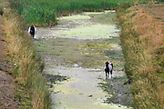 Nederland, Malden, 15-8-2020  In een droogevallen waterplas lopen twee paarden, pony s . Omdat ze bij de groene grasoever kunnen vinden ze hier voedsel .Foto: ANP/ Hollandse Hoogte/ Flip Franssen