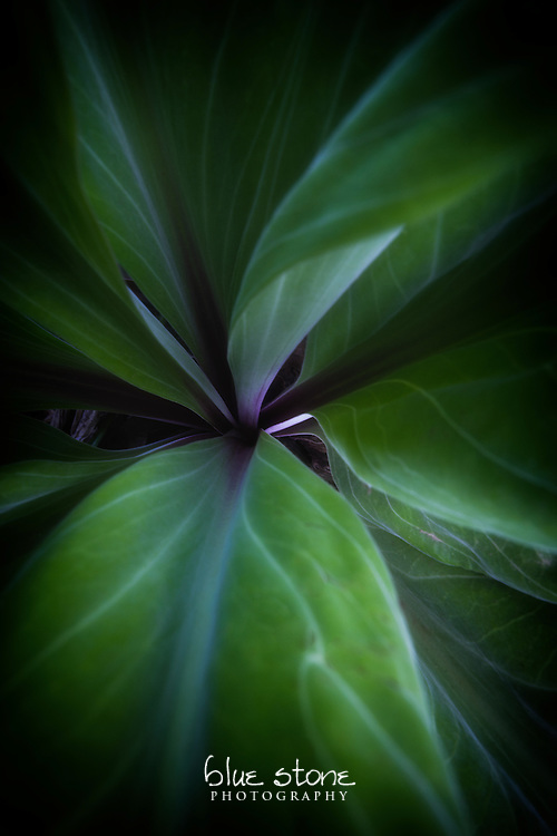 A delicate purple center of mountain forest flora in the high desert is immersed in deep green.<br /> <br /> Wall art is available in metal, canvas, float wrap and standout. Art prints are available in lustre, glossy, matte and metallic finishes.