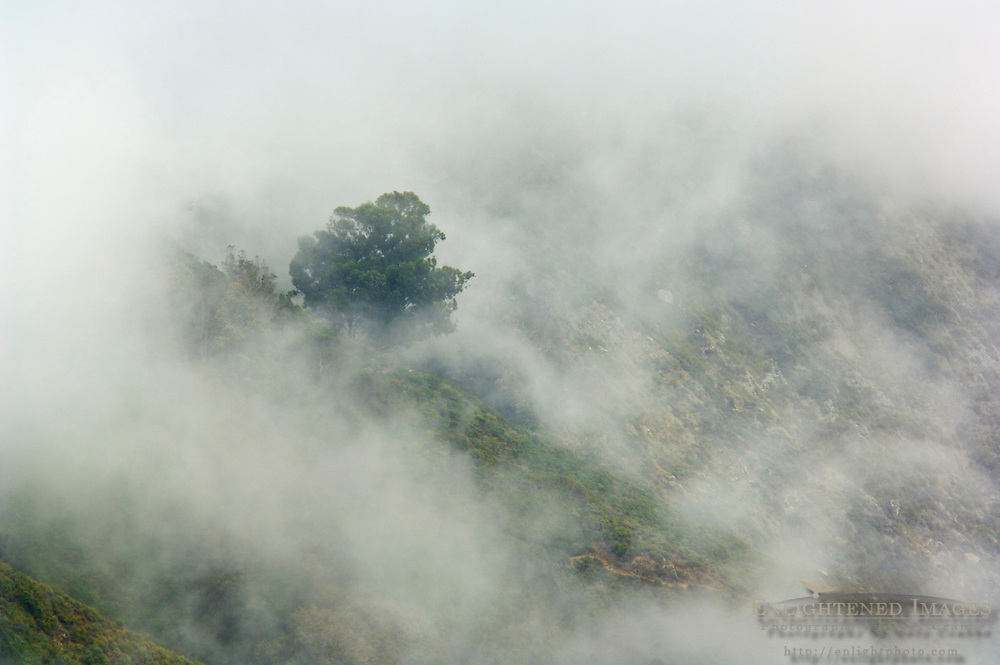 Coastal fog and trees on hillside along Big Sur Coast, Monterey County, California