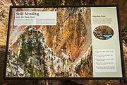 Interpretive sign at Artist Point, Grand Canyon of the Yellowstone, Yellowstone National Park, Wyoming USA