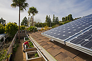 Solar Array on roof of house. Urban garden encircles house in Rancho Palos Verdes. Judy Frankel's three year old garden has a variety of citrus, Nectarine, Peach, Apple and Cherry trees as well as seasonal vegetables in planting beds in the back yard. Rancho Palos Verdes, Los Angeles County, California, USA