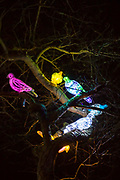 Pigeons in a tree that are part of the 'A Long Way from Home For Percy' installation by Bayle Window at Cheriton Light Festival 2018 on St Hilda Road, Folkestone, Kent, United Kingdom. The exhibition acts a reminder that every pigeon has a story.
