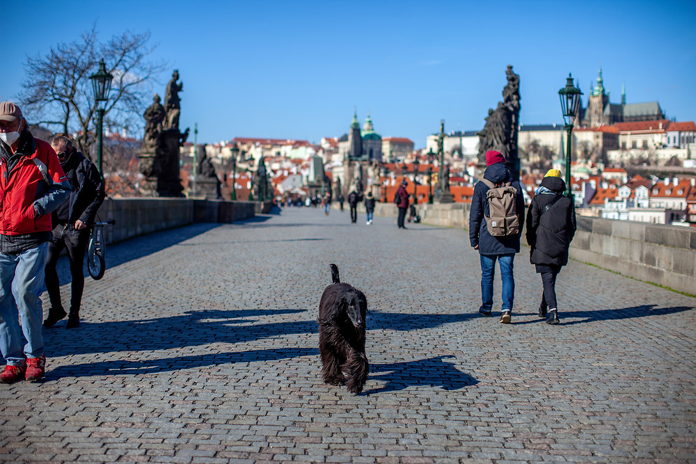 A dog is walking himself across Charles Bridge. On March 1st, 2021 the state of emergency in the Czech Republic was reinstalled because of fast increasing numbers in infections. The lockdown was reinstated and the restriction of the free movement of people has taken effect. Currently, the country remains at the highest stage of the anti-epidemiological system and the newly imposed restriction will last at least three weeks to curb the epidemic.
