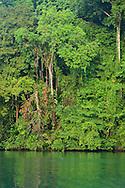 The Costa Rican rain forest rises above the Rio Agujitas near Punta Rio Claro National Wildlife Refuge, Costa Rica.