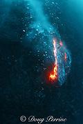 pillow lava from Kilauea Volcano erupting underwater, Puna, Hawaii Island ( the Big Island ), Hawaii, U.S.A. ( Central Pacific Ocean )