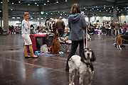 Participants of the World Dog Show 2017 are waiting for the first round of judging and evaluating. Over 31,000 dogs from 73 nations will come together from 8-12 November 2017 in Leipzig for the biggest dog show in the world.