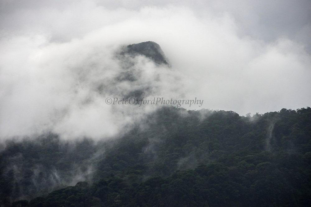 Mount Ayanganna<br /> Tepuis (Flat-topped mountains)<br /> Potaro-Siparuni Region<br /> Brazil Guyana border<br /> GUYANA<br /> South America<br /> Mount Ayanganna is a sandstone tepui in the Pakaraima Mountains of western Guyana, 85 kilometres east of Mount Roraima at 5°23′N 59°59′W / 5.383°N 59.983°W. With a height of 2,041 metres it is the easternmost tepui taller than 2,000 metres