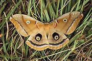 Moth on grass.