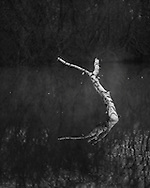 A fallen tree sticks out of the water in the pond at Whitmoor Common near Guildford, UK, on 9th Aptil 2015. Picture by Andrew Tobin/Tobinators Ltd