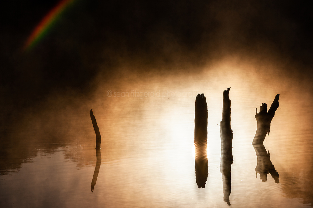 Morning fog and rainbow on spring-fed pond and tree stumps in water, Hill Country between Blanco and Fredericksburg, Texas, USA