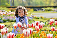 24th April <br />Kaia Baccardi 3 yrs from Lytham Lancs , enjoys the flowers  at Stanley Park Blackpool <br /> on the hottest day of the year