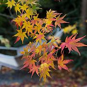 Autumn Garden 784