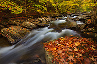 autumn foliage along E. Branch Missisquoi River in Hazen's Notch, Vermont