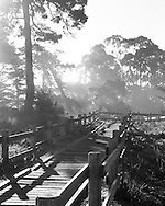 Morning light filters through coastal cypress trees and fog, and a boardwalk winds though the dunes overlooking the beaches of Monterey By