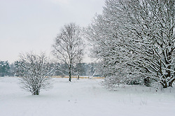 Franse Kampheide, Bussum, Gooise meren, Noord Holland, Netherlands