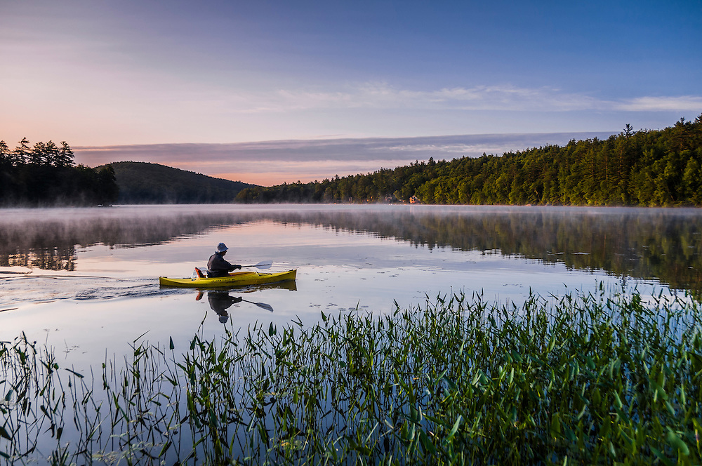 Pickerell weed and kayaker, early morning fog rising over water, Webster, NH