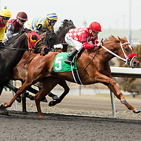 Thoroughbred Racing 2014 - Gallery 01