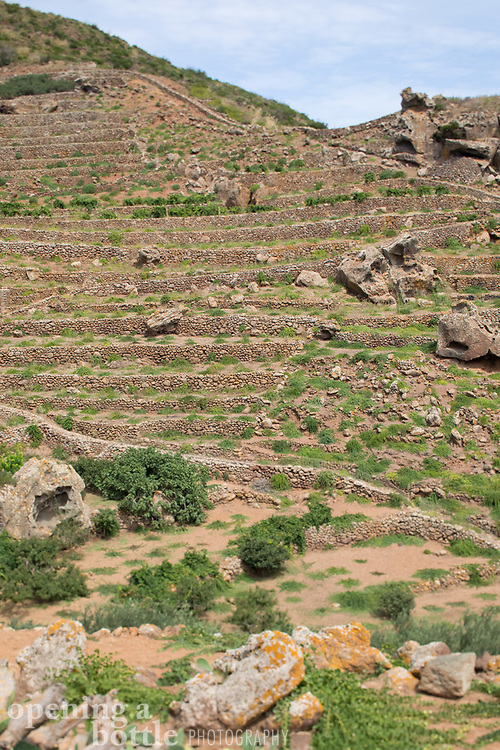 The heroic viticulture displayed on the island of Pantelleria is centered on terraced vineyards of Zibibbo as well as caper bushes.