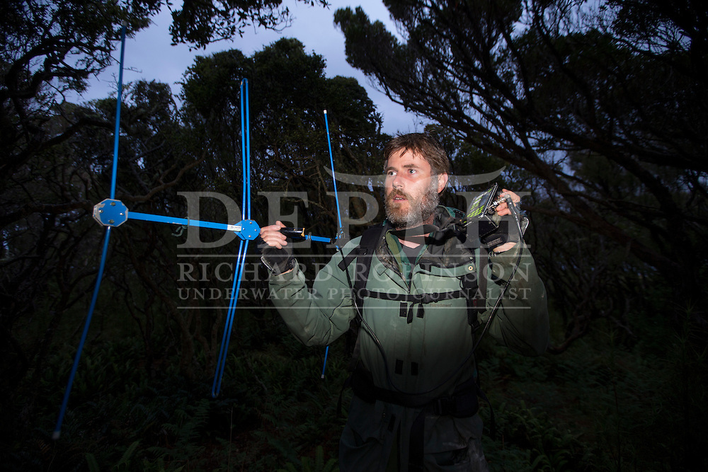 Chris Muller Massey University wildlife biologist tracks Yellow Eyed Penguins that have been attached with radio transmitters to help locate their elusive nests in the Sothern Rata forest at Enderby Island in the subantarctic Auckland Islands archipelago, New Zealand.<br />  06 January 2016<br /> Photograph Richard Robinson © 2016