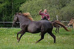 Rocky Mountain Horses<br /> La Cense aux Hirondelles - Vielsalm 2009<br /> Photo © Dirk Caremans