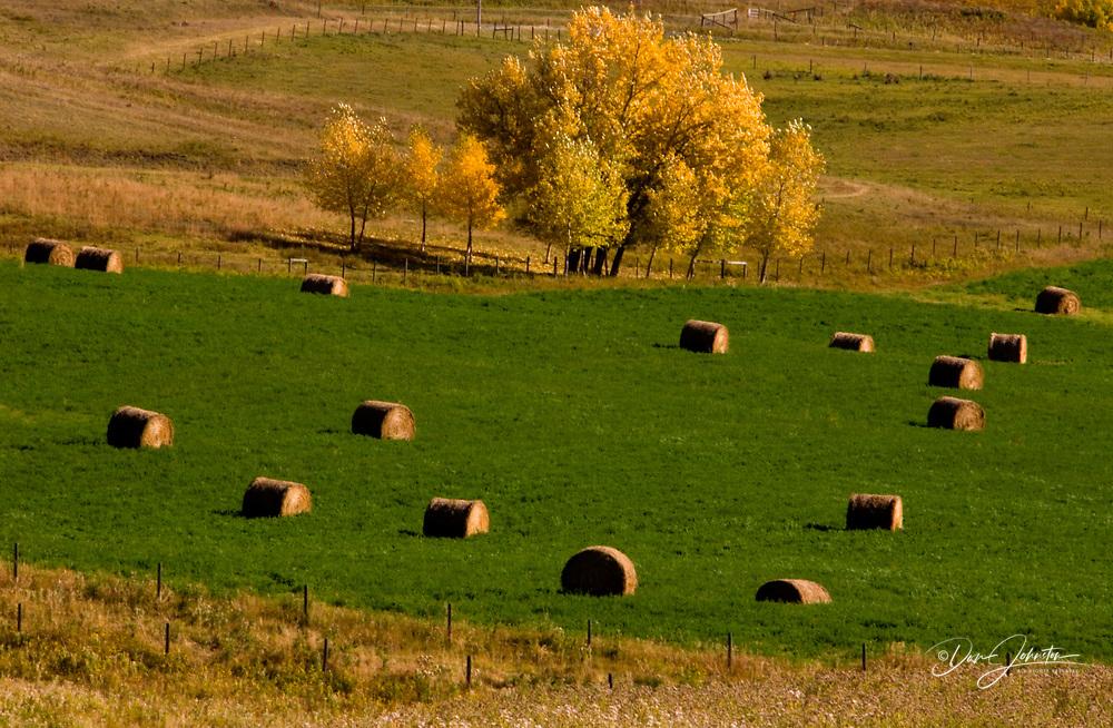 Aspen and hayrolls, Longview, Alberta, Canada