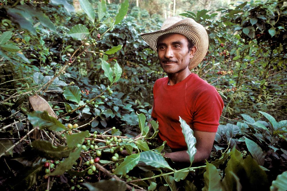 Honduras: Hispanic coffee plantation worker near Danli rural Honduras. ©Bob Daemmrich/