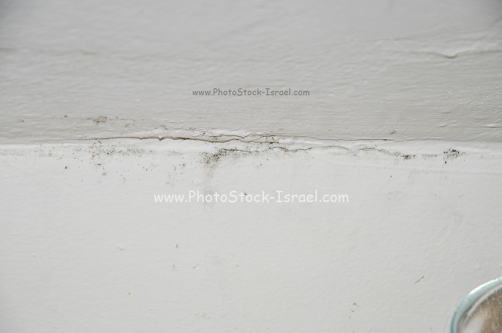 Mould grows on cracked plaster and paint on an interior wall effected by dampness