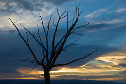 Tree in Winter against a sunset sky