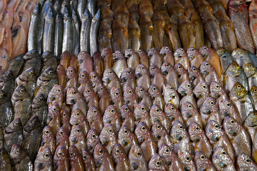 """Fish displayed at Fish restaurants, Yangma island, prefecture Yantai, Shandong, China. Yangma Island is situated by the Yellow Sea and it is called """"the pearl in the sea""""."""