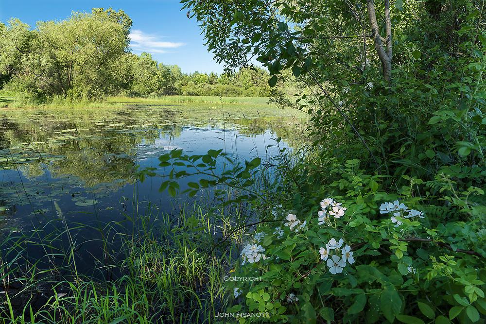 Pond at Gordon Bulboz Nature Preserve, Wisconsin