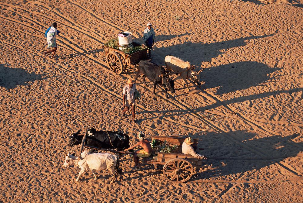 Cattle drawn carts on sand, Mandrare river, Madagascar.