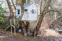 https://Duncan.co/treehouse-with-siding