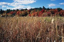 Great Meadows Foliage