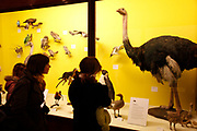 The Natural History Museum, London. Visitors looka t stuffed exhibits in the birds galley.