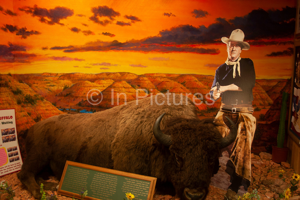 At a craft store a cut out figure of western legend John Wayne stands above a stuffed Buffalo in a scene of The Badlands, near Minot, North Dakota, United States.