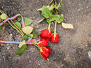 24 FEBRUARY 2014 - BANGKOK, THAILAND: Roses left by mourners on the ground at the scene of a grenade attack on anti-government protestors at the Ratchaprasong intersection in Bangkok. At least four people, three of them children, were killed in political violence over the weekend in Thailand. One in Trat province, near the Cambodian border, and three in Bangkok, at the Ratchaprasong protest site. At the Ratchaprasong site a grenade was fired into a crowd killing a child and an adult. A second child, injured in the blast, died overnight in a Bangkok hospital.   PHOTO BY JACK KURTZ