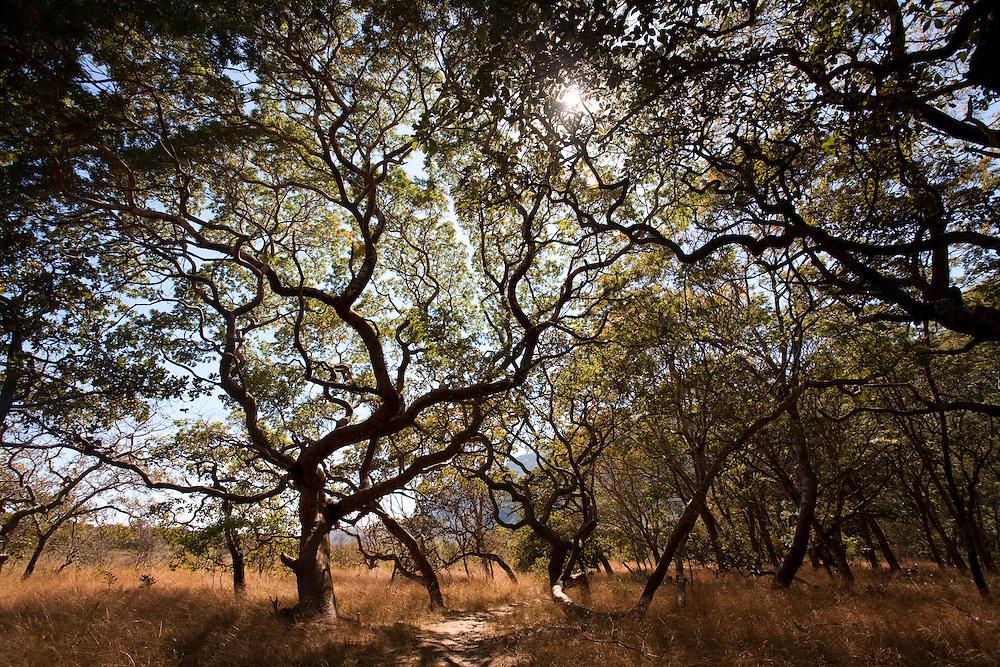 Santana do Riacho_MG, Brasil...Parque Nacional da Serra do Cipo em Santana do Riacho...The National Park Serra do Cipo in Santana do Riacho...Foto: LEO DRUMOND / NITRO