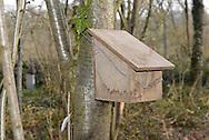 Nest box for Hazel Dormouse - Muscardinus avellanarius