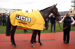 Pentland Hills after victory in the JCP Triumph Hurdle during Gold Cup Day of the 2019 Cheltenham Festival at Cheltenham Racecourse.