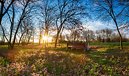 Sun shine over a blossom meadow in the parkland