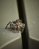 Spider. Image taken with a Nikon 1 V3 camera and 70-300 mm VR lens (ISO 400, 300 mm, f/5.6, 1/320 sec).
