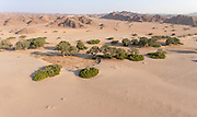 Aerial view of desert trees, Skeleton Coast, hoanib river, Northern Namibia, Southern Africa