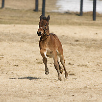 Tara Hills Stud - Mares & Foals