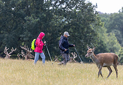 Licensed to London News Pictures. 06/08/202. London, UK. With weather more like September, walkers brave the rain in Richmond Park as wind and rain is set to hit the South East today. Yellow weather warnings for England have been issued for heavy rain, flooding, and high winds as the bad weather is expected to continue throughout the weekend. However brighter weather is forecast for next week with highs of 22c. Photo credit: Alex Lentati/LNP