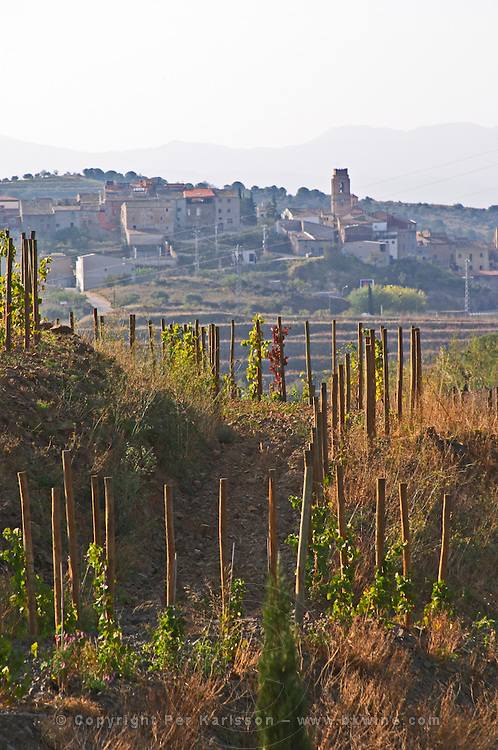 """Vines pruned on stakes, """"echalat"""". View over Gratallops from winery. Mas Igneus, Gratallops, Priorato, Catalonia, Spain."""